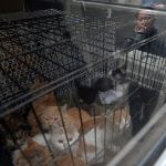 UHVAĆEN NA DELU: Predstavljao se kao zaštitar životinja, a svakodnevno ubijao i mučio mačke!