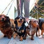 BRAVO DEVOJKE: Jelena i Marta šetaju vlasničke pse i doniraju za napuštene kuce!