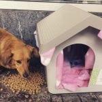 PRVI GOSTI STIGLI: U kućicama za napuštene u opštini Stari grad ugrejali se prvi psi!