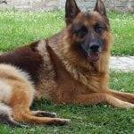 Ovo je Kenzo i nestao je pre 2 dana. Ana nudi nagradu za onog ko ga nađe!