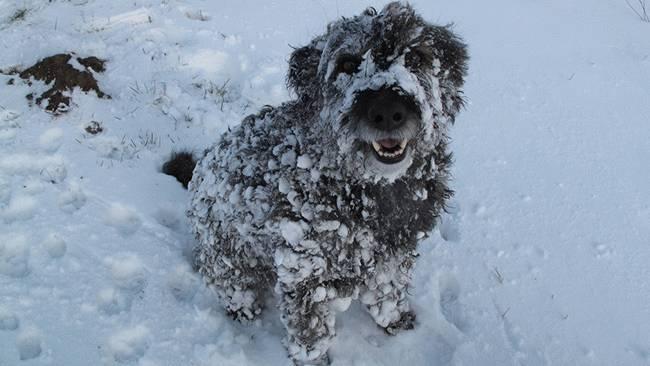 Psi vole sneg petface