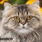 Problemi sa bubrezima kod mačaka