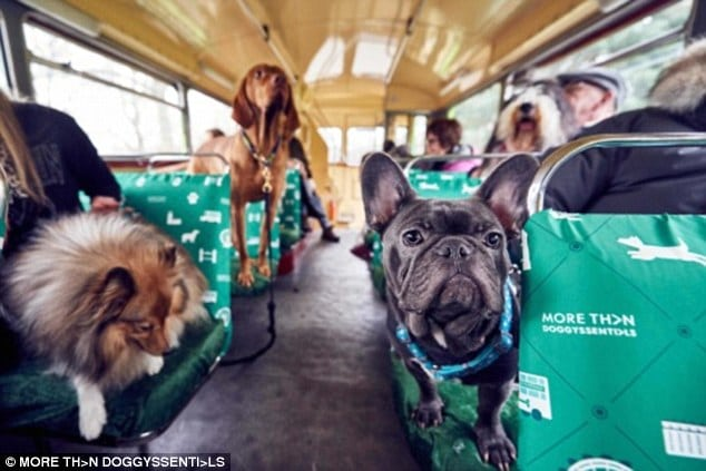 dog friendly autobus petface
