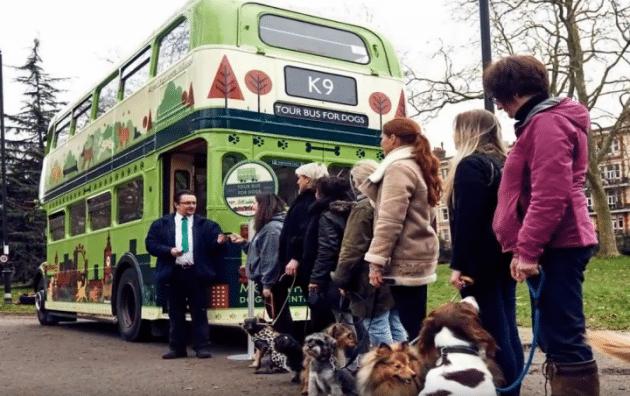 dog friendly autobus petface2