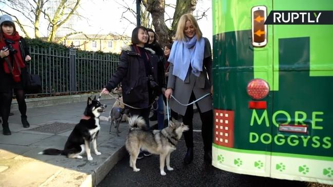 dog friendly autobus petface2