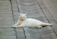 mačak petface