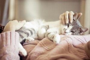 mačku petface