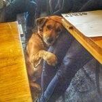 ORDEN ZA HUMANOST: Konobar pustio psa u kafić da se ugreje!
