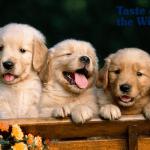 Upoznajte se sa šest najsrećnijih rasa pasa