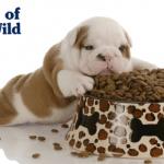 Značaj dobre ishrane štenaca za njihov razvoj
