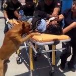 VERNI DO KRAJA: Psi uskočili u vozilo hitne pomoći i tešili povređenog vlasnika!
