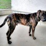 NIKOLINA PIŠEK mesec dana u potrazi za Kontom – jednim od pasa koje je spasila sa ulice!