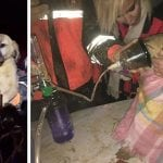 VIDEO: Izvukli psa iz rupe duboke 60 metara!