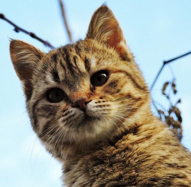 Maca iz kante petface
