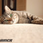 Kako pravilno da brinete o svojoj staroj maci?