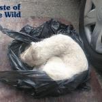 Štene bačeno u plastičnoj kesi dobilo šansu za novi život