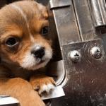 BRAVO ZA IDEJU: U ovom gradu ćete moći da kupite ISKLJUČIVO psa sa ulice!