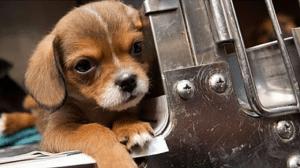 psa sa ulice petface