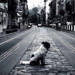 """VESIĆ: """"Oni koji svoje pse puste zauvek na ulicu biće strogo kažnjeni""""!"""