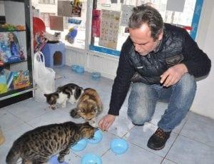 ulične mačke petface