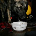 ADA CIGANLIJA: Irena zaronila u ledenu vodu i spasila zarobljenog psa!