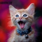 Pet saveta za odgajanje zdrave i srećne mačke