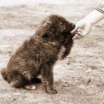 DIRLJIVA PESMA (ne)čoveku koji je posle 10 godina napustio psa!