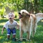 Dete želi psa? Evo koji psi su pravi izbor za njega!