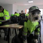 EVO KAKO SE REŠAVA PROBLEM: Ulični pas, Azul, dobio posao u policiji!