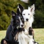 Sećate se pasa koji ne prestaju da se grle? Dobili su mlađeg brata! (VIDEO)