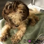 Čudesna transformacija ućebanog neuhranjenog psa