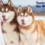 Taste of the Wild vam predstavlja pet najsnažnijih rasa pasa
