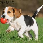 Otkrijte koje su najbolje igre u prirodi za vas i vašeg psa