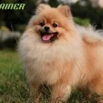 TRAINER vam predstavlja 10 najpopularnijih malih rasa pasa