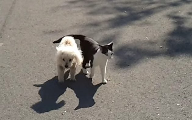slepom psu petface