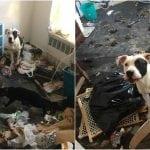JEZIV PRIZOR: Pas Redži i maca Silvester spašeni iz stana prepunog smeća i otpada!