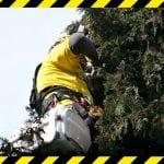 BRAVO LJUDI: Spasili mače iz krošnje drveta u Mirijevu!