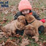 Istraživanje potvrdilo da štenci vole kada im se tepa