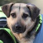 NEVEROVATAN ŽIVOT KUJE SA ULICE: U Bosni su je hteli da je ubiju, u Češkoj je udomljena i postala terapijski pas!