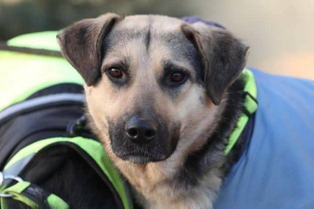 terapijski pas petface
