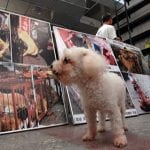 POBEDA: Ovo je PRVA AZIJSKA ZEMLJA koja je zabranila jedenje pasa i mačaka!
