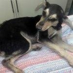 SRAMNA ODLUKA: Sudija u Pančevu izjavila da NIKO NIJE KRIV za prebijanje 5 pasa na smrt!