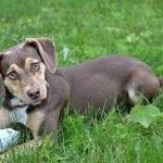 Udomljeni pas, Kikiriki, spasio trogodišnju devojčicu iz jark au koji je upala!