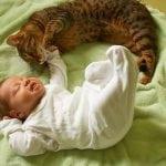 POSLUŠAJTE ISTRAŽIVANJE: Bebe koje žive uz mace su ZDRAVIJE!