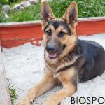 BIOSPOTIX vam predstavlja pet lakih dvorišnih igara sa psom