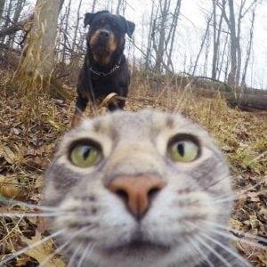 mačje fotobombe petface