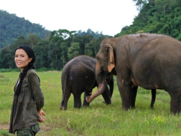 slončić petface