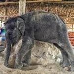 Ljudi iz svih krajeva sveta skupljaju pomoć za slončića, kom hitno treba mleko!