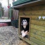 Ministarstvo potvrdilo: Nema više ubijanja pasa u skloništima!