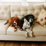 U Pančevu zabranili čuvanje više od dva psa, SUD odluku proglasio NEZAKONITOM!